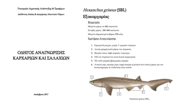 update of the sharks and rays identification guide by the greek